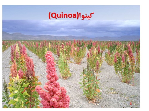 پاورپوینتی زیبا در مورد گیاهان جدید