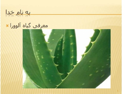 پاورپوینت در مورد گیاه آلورا